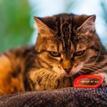 Pet ID Dogtags on Instagram
