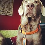 Dog Collar Dog Tags (Instagram)